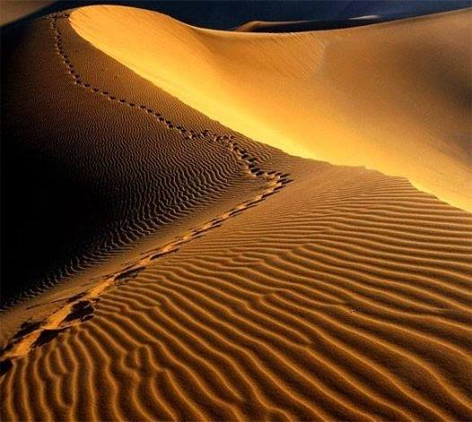 de reis door de woestijn van egypte naar het beloofde land