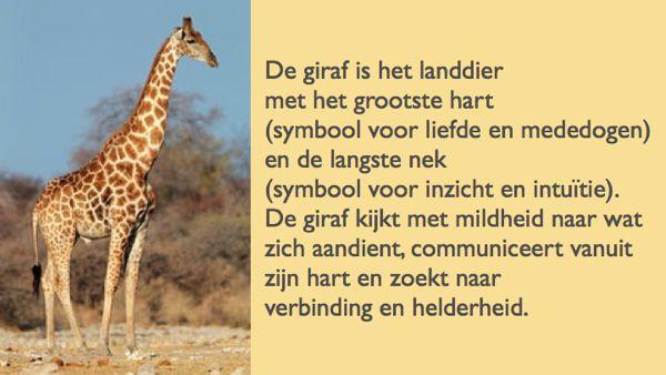 Giraf is het landdier met het grootste hart en de langste nek